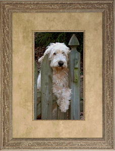 Framed photo of dog