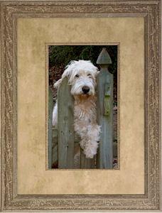 Framed photo of dog